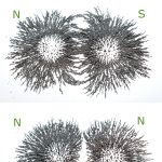 magnetic field lines formed from iron filings with N and S poles