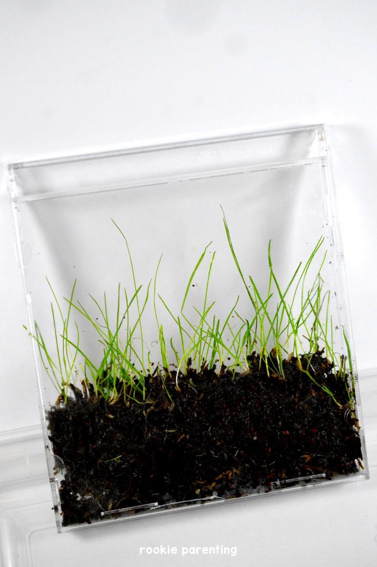 grass grows inside the cd garden