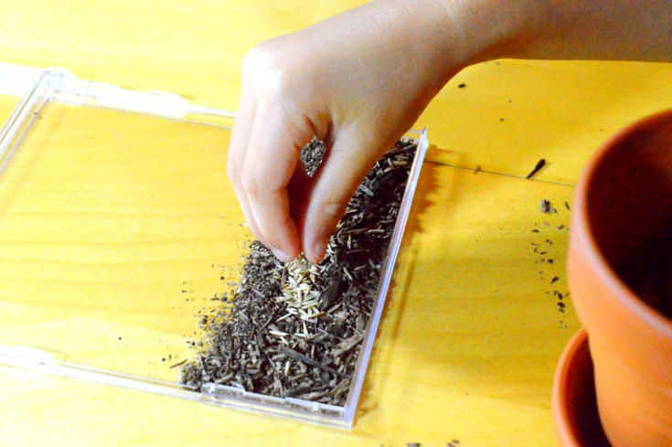 Grow your own grass garden: sprinkle seeds