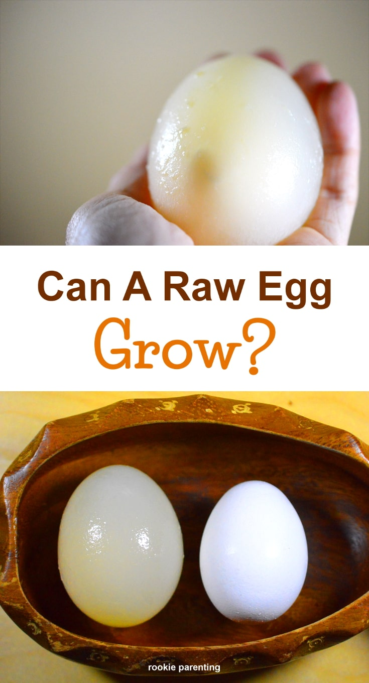 Egg in hand, Raw egg before and after growing. Can a Raw Egg Grow experiment.