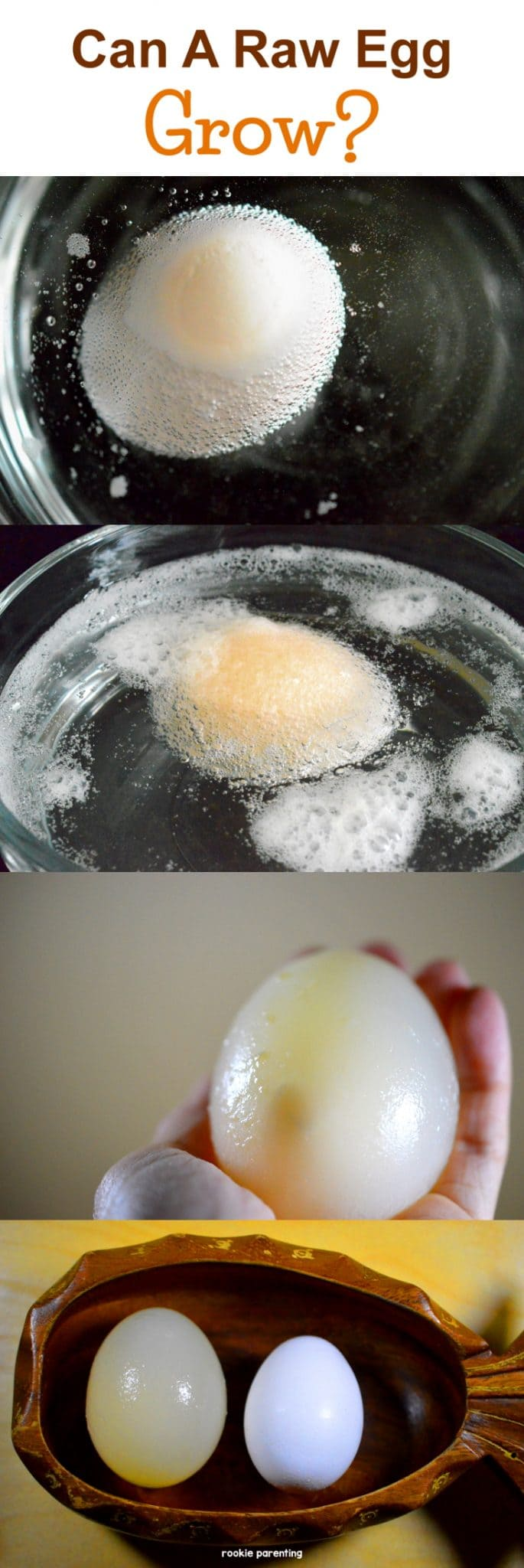 Raw egg growing in 4 different stages. Using vinegar, you can make a raw egg grow bigger, hold it in your bare hand and bounce it up and down. It's amazing!