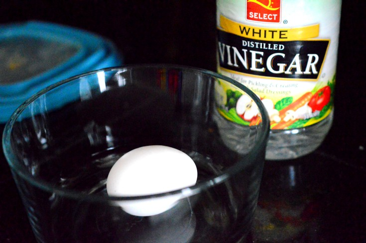 Science experiment: what you need to grow a raw egg